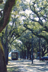 Streetcar in New Orleans with Oak Trees